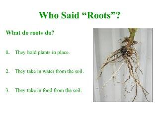 iPad Photo Slideshow - Roots, Stems, Leaves Lesson Plan