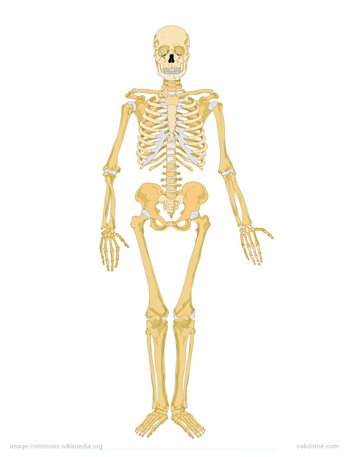 Labeling The Skeletal System | K-5 Computer Lab Technology Lessons