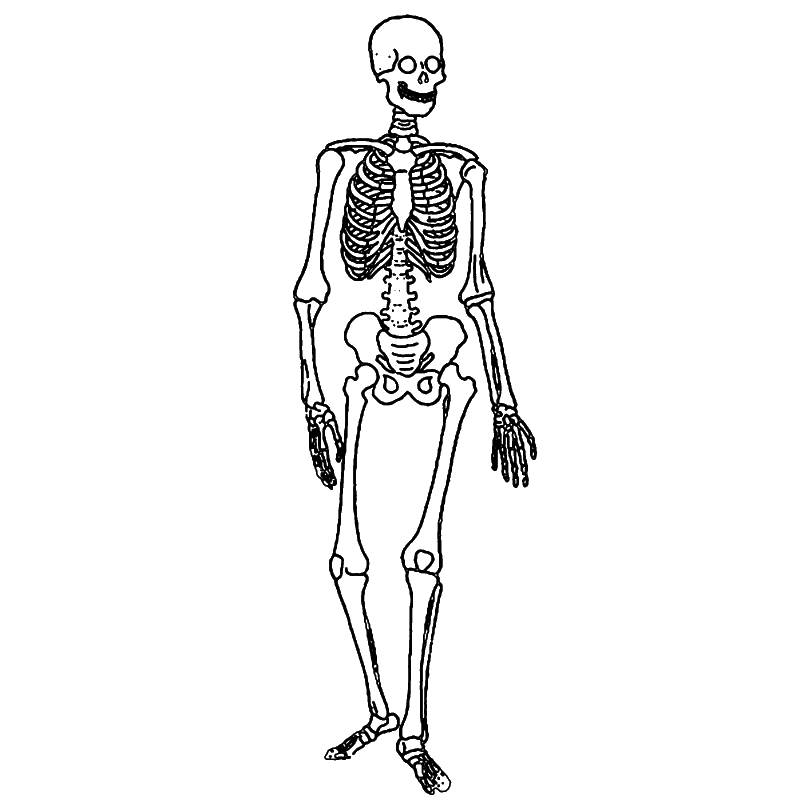 labeling the skeletal system | k-5 computer lab technology lessons, Skeleton