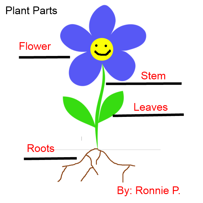 labeled plant parts