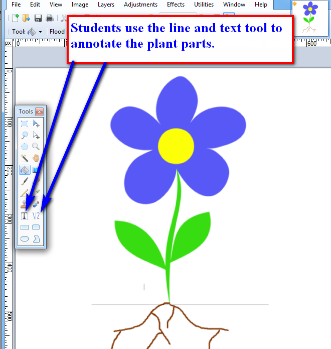 Labeling Flowers Stems Leaves And Roots K 5 Computer Lab