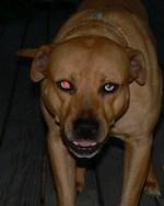 Remove red eye