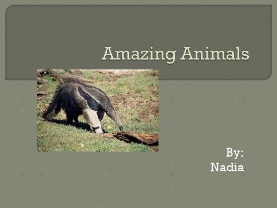 those amazing animals