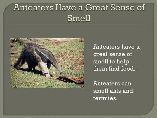 Amazing Animals Unique Qualities