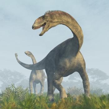 http://oakdome.com/k5/lesson-plans/powerpoint/images/dinosaurs/sauropod-4.jpg