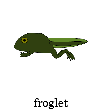Frog Life Cycle PowerPoint | K-5 Computer Lab Technology Lessons