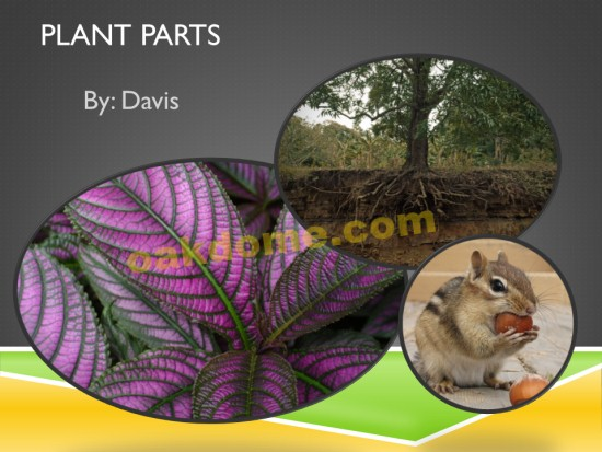 Parts of a plant ppt.