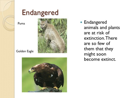 Extinction Of Endangered Species Essay