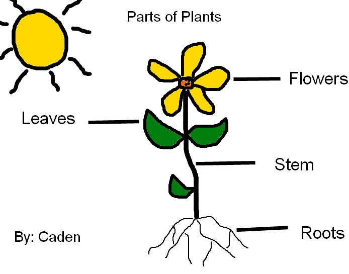 Image result for parts of a plants